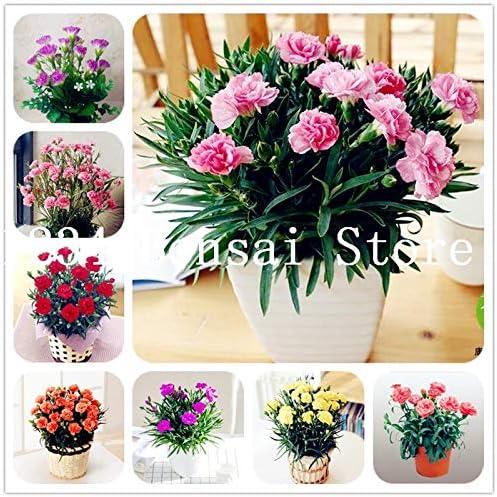 Pinkdose 200 piezas Bonsai Plantas de clavel Jardín hermoso Plantas de flor Plantas de fácil crecimiento Para el hogar Flores de jardín Plantas en maceta: mezcla: Amazon.es: Jardín