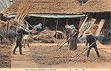 Japan Farming Striking Barley Antique Postcard J65654