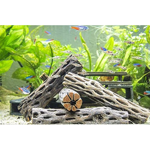 Best Real Driftwood For Aquarium
