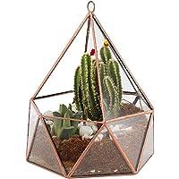 ElegantLife Glass Geometric Terrarium, Succulent & Air Plant(No Plant Included)