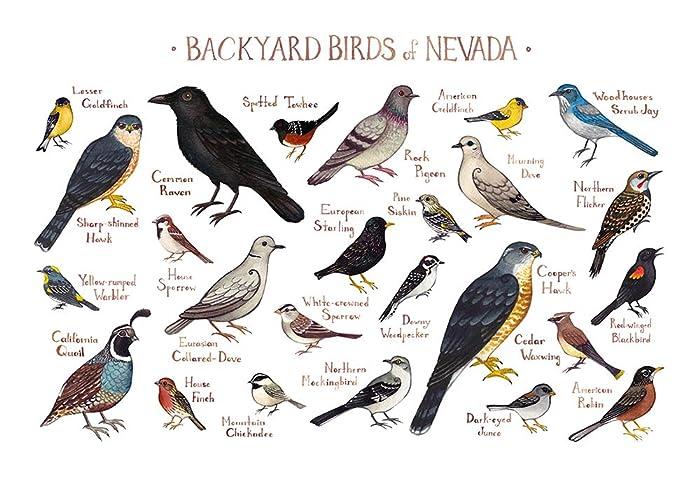 Backyard Birds Of Nevada Field Guide Art Print