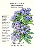 Heliotrope Dwarf Marine Seeds - .10 grams - Botanical Interests