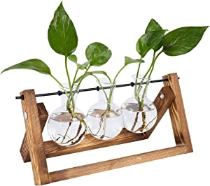 TQVAI Air Planter Terrarium Glass Vase(3 Bulb Vase) with Retro Wooden Stand and Metal Swivel Holder Cute Air Plant Globe - Ideal for Home Office Decoration