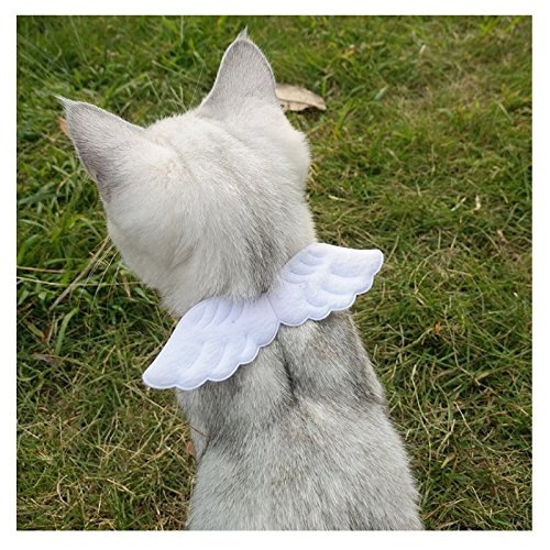 Cute Angel Costume - Stock Show Pet Small Dogs Cats