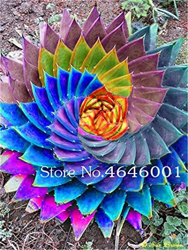 hot Sale!102 pcs Rare Color Aloe Seeds lithops Garden,Potted Plants Perennial suculentas Cactus Flores planta Absorb Radiation: Mixed