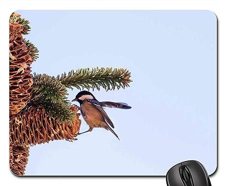 Amazon.com: Mouse Pad - Madrid Spain Bird Pine Fir Tree ...