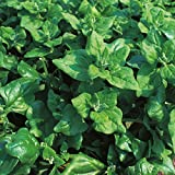 Spinach - New Zealand - 100 Seeds