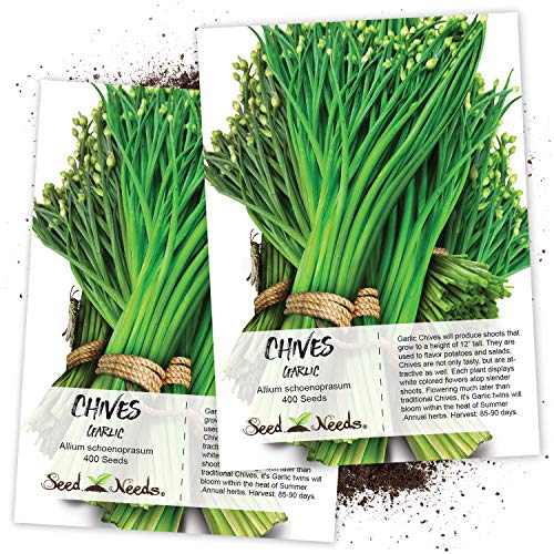 Seed Needs, Garlic Chives Herb (Allium tuberosum) Twin Pack of 400 Seeds Each Non-GMO