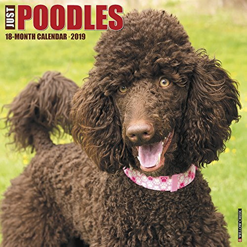 Standard Poodle Puppies (Just Poodles 2019 Wall Calendar (Dog Breed Calendar))