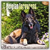 Belgian Tervurens 2016 Square 12x12 (Multilingual Edition) by Browntrout Publishers (2015-07-15)