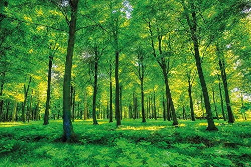 GREAT ART Photo Wallpaper Green Forest 132.3x93.7in / 336x238cm - Wallpaper 8 Pieces Includes Paste.