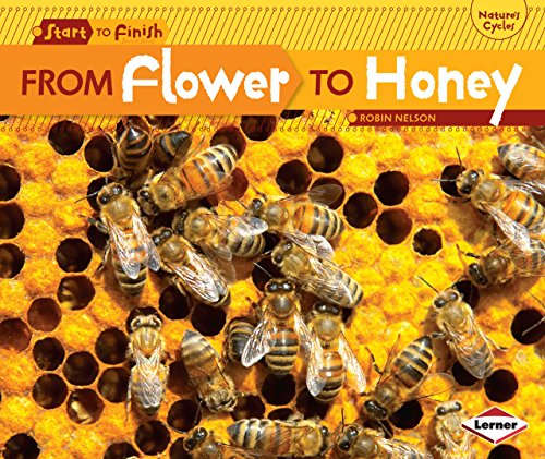 From Flower to Honey (Start to Finish: Nature's Cycles)