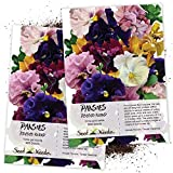Seed Needs, Rococo Pansy Mixture (Viola Germania) Twin Pack of 600 Seeds Each