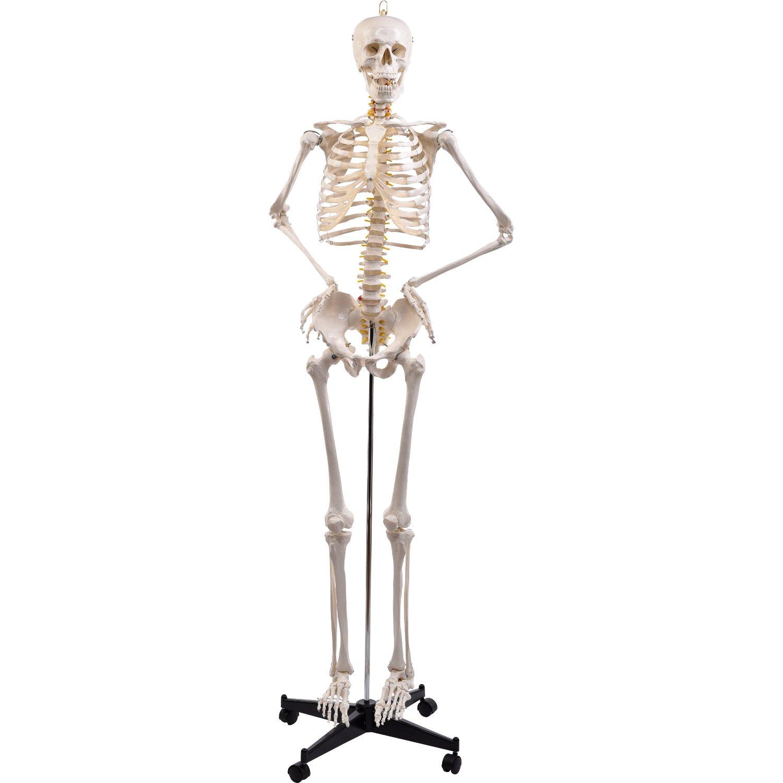 Tolle Anatomie Des Menschlichen Körpers Knochen Bilder - Anatomie ...
