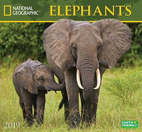 National Geographic Elephants 2019 Wall - Calendar Elephant