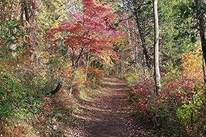 Autumn Leaves Backdrop Fall Foliage Nature Photography Art Print - 11x14