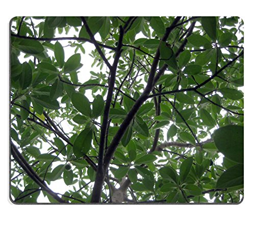 msd-mousepad-avocado-tree-plant-nature-leaf-natural-rubber-material-image-592181