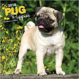 Amazoncom Pug Puppies 2018 12 X 12 Inch Monthly Square Wall