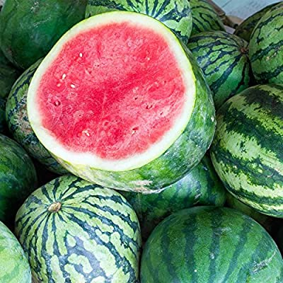 Watermelon Garden Seeds - Tasty Seedless Hybrid - Non-GMO Vegetable Gardening Water Melon Fruit Seeds