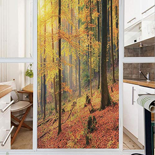 Decorative Window Film,No Glue Frosted Privacy Film,Stained Glass Door Film,Colorful Autumn Forest Sun Golden Leaves Trees Seasonal Scenics Pictur,for Home & Office,23.6In. by 59In Green Orange Yellow