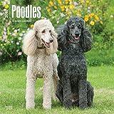 Poodles Wall Calendar 2018 {jg} Best Holiday Gift Ideas - Great for mom, dad, sister, brother, grandparents, , grandchildren, grandma, gay, lgbtq.