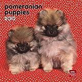 Pomeranian Puppies 2012 7X7 Mini Wall Calendar