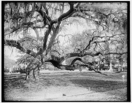 Photo  Magnolia Cemetery Live Oaks Burial Grounds Charleston South Carolina Sc C1900