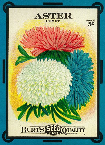 (Aster (comet) Seed Packet (12x18 Art Print, Wall Decor Travel Poster))