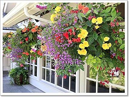 Amazon.com barewalls Many Hanging Baskets with Flowers