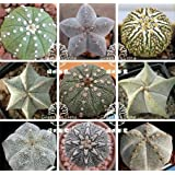 450pc 9kiands each 50pc Planet genus mixing succulents cactus seeds imported from Germany, home gardening wonderful fleshy seed
