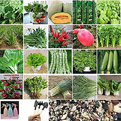 Gaweb-Seed Collections Organic Vegetable Seeds Edible Planting, 1000Pcs Mixed 20-Species Vegetable Fruits Seeds with Watering Can Planting Tools - Mixed Vegetable Fruits Seeds : Garden & Outdoor
