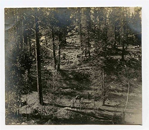 Miner & Mule La Tasajera Suissa San Pedro Mountains B & W Photo 1902 Mexico