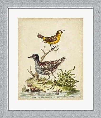 Amazon.com: Antique Bird Menagerie II by George Edwards Framed Art ...