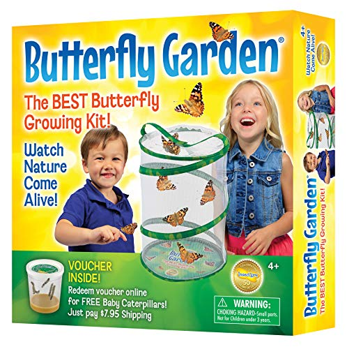 - Insect Lore Butterfly Growing Kit - With Voucher to Redeem Caterpillars Later