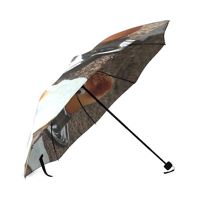 Huevo Classic paraguas resistente al viento automático paraguas de viaje compacto lluvia, ligero: Amazon.es: Deportes y aire libre