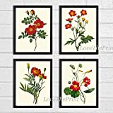 Beautiful set of 4 prints based on antique botanical illustrations from 1887. Wonderful details, colors and natural history feel. • The prints measure 4x6, 5x7, 8x10, or 11x14 inch. based on your selection and come with a white border for eas...