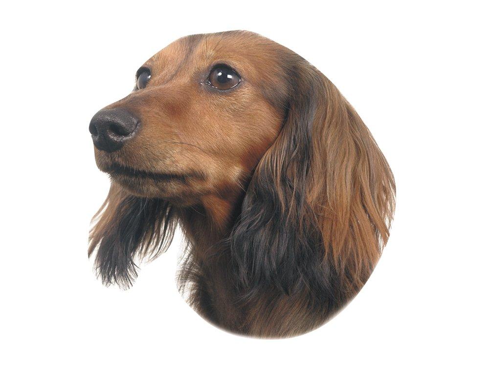 Nobby adhesivo perro salchicha 93278
