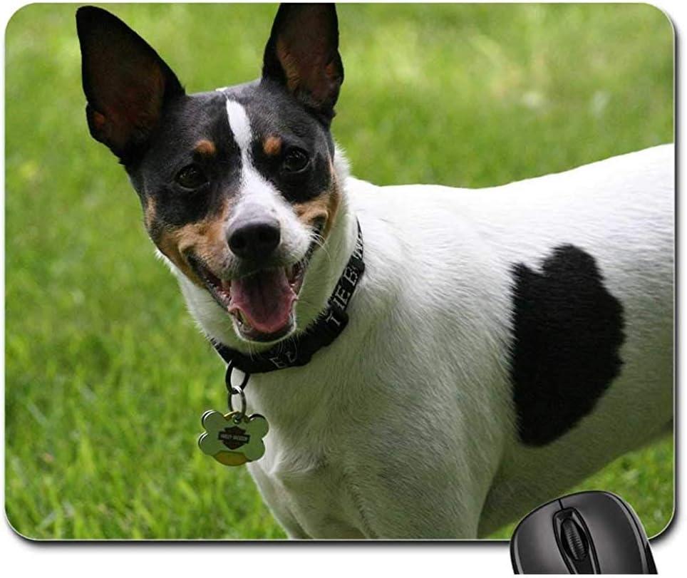 OKME Custom Alfombrilla De Teclado,Rat Terrier Perro Canino ...