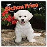 Bichon Frise Puppies 2018 12 x 12 Inch Monthly Square Wall Calendar, Animals Dog Breeds Puppies Canine