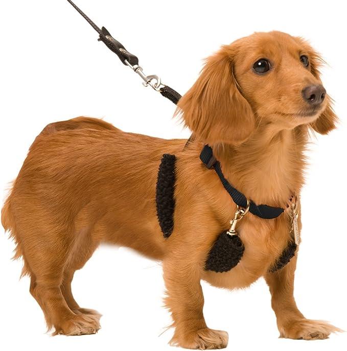 Amazon.com: Arnés de entrenamiento para perro, sin tirones ...