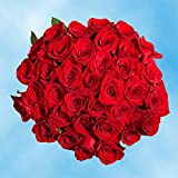 GlobalRose 50 Fresh Cut Red Color Roses - Express Delivery - Perfect for Birthday, Anniversary or any occasion.