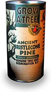 product image for Ancient Bristlecone Pine Tree Growing Kit - Pinus Aristata - Grow Evergreen Pines from Seed To Saplings - Kit Includes Seeds, Instructions, More.