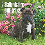 Staffordshire Bull Terrier Puppies Wall Calendar Pups Puppy Dogs 2018 {jg} Best Holiday Gift Ideas - Great for mom, dad, sister, brother, grandparents, grandchildren, grandma, gay, lgbtq.