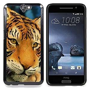 """Qstar Arte & diseño plástico duro Fundas Cover Cubre Hard Case Cover para HTC One A9 (Tigre triste Sleepy Cansado Big Cat felina"""")"""