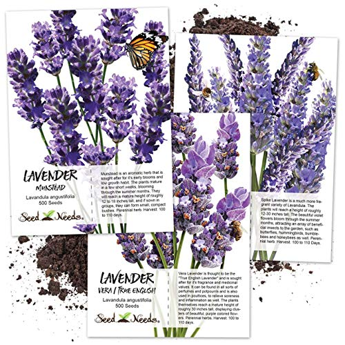 (Lavender Herb Seed Packet Collection (3 Varieties of Lavender) Open Pollinated Seeds by Seed Needs)