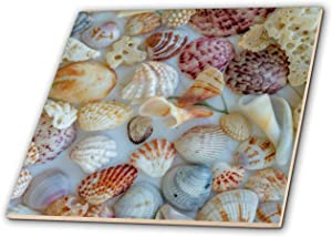 3dRose Collection of Seashells from Sanibel Island in Florida, USA - Tiles (ct_331193_6)