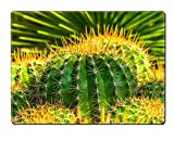 MSD Placemat Ferocactus pottsii Cactaceae Mexico Image 33297370 by MSD Customized Tablemats Stain Resistance Collector Kit Kitchen Table Top DeskDrink Customized Stain Resistance Collector Kit