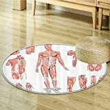 Human Anatomy Circle carpet by Nalahomeqq Inner Muscle System Skin Structure with Cells Biology Health Medical Display Fabric Room Decor non-slip Coral Grey-Diameter 110cm(43'')