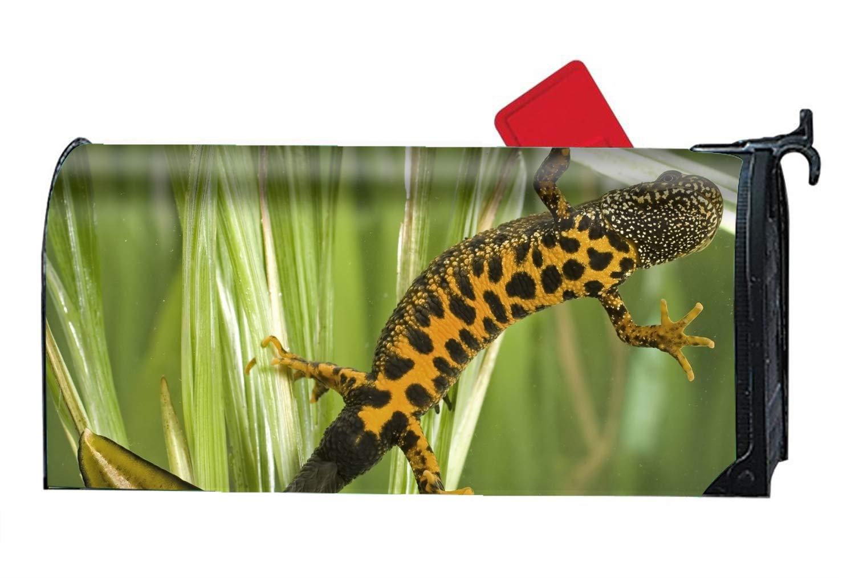 WilBstrn Animal Newt Salamanders Salamander Fish Magnetic Mailbox Cover Decorative Mailboxes Makeover