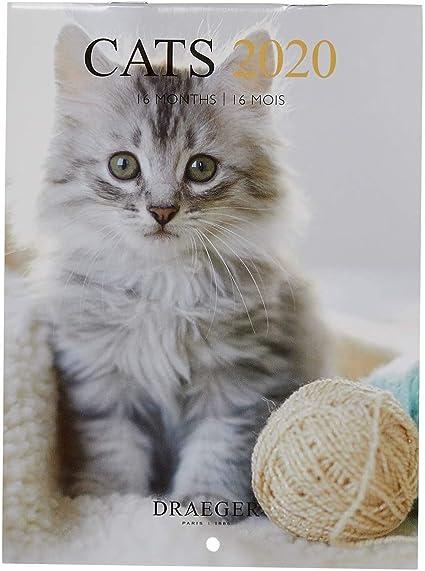 Draeger - Calendario de Pared Pequeño Gatos 2020 - Calendario de Gatos - Cuadrícula Mensual - 7 Idiomas - Certificado FSC Mixta - Tinta Vegetal - Calendario de Pared 2020 Formato Pequeño 14x18cm: Amazon.es: Oficina y papelería